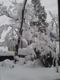 大雪2 20101225
