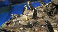 すみだ水族館 ペンギン