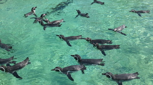 臨海公園 ペンギン