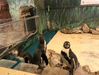 新屋島水族館ペンギン