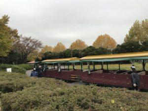 昭和記念公園(パークトレイン)